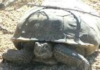 As tartarugas do deserto que obrigaram a Marinha dos EUA a mudar seus planos - NPS/BBC