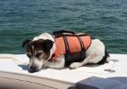 Cão com colete salva-vidas é resgatado depois de 3 horas em alto-mar (Foto: Reprodução/Shawn Sahr/Daily Mail)