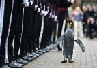 Pinguim recebe honrarias militares e promoção em zoo escocês (Foto: Mark Owens/AFP)
