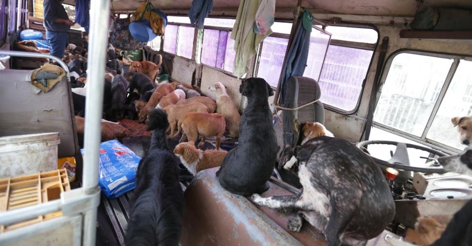 21.jul.2015 - Vítima da enchente usa ônibus para recolher 140 cães abandonados em Alvorada, no Rio Grande do Sul.Já são 50 mil os habitantes do Estado afetados pelas enchentes causadas pelas fortes chuvas dos últimos dias. A Defesa Civil lista 63 cidades atingidas por enchentes e alagamentos