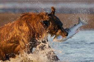 Barrett Hedges/National Geographic Creative