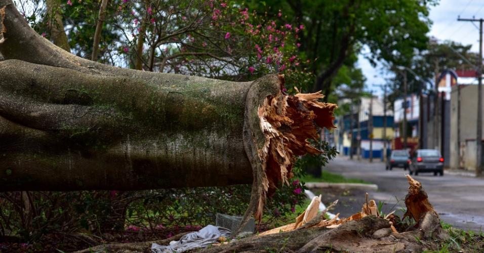 9.set.2015 - Um temporal acompanhado de fortes ventos causou muitos estragos na cidade de São José dos Campos (SP), na noite de terça-feira (8). Nesta manhã, há registro de árvores caídas e falta de energia elétrica