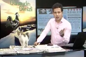 Gato vira-lata interrompe jornal em TV turca (Foto: Reprodução/Youtube/Kamu Gundemi)