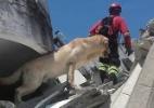 Cão que ajudou a resgatar vítimas de terremoto morre de infarto no Equador (Foto: Reprodução/Facebook Cuerpo De Bomberos Ibarra Ibarra)