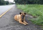 Cadelinha é morta após passar um ano esperando o retorno dos donos em estrada tailandesa (Foto: Reprodução/Facebook)