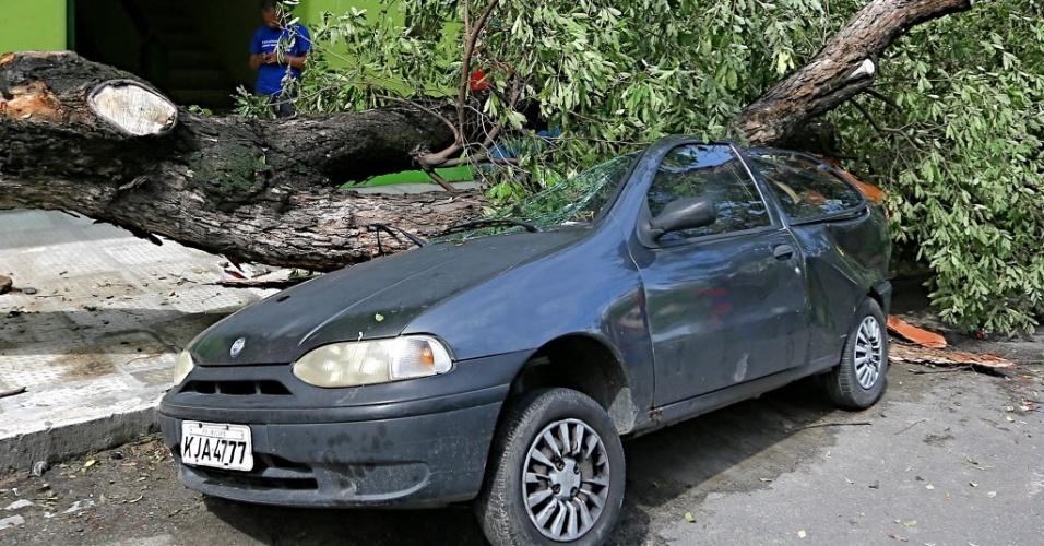 30.jan.2016 - Carro é atingido por queda de árvore no Recife. Capital pernambucana sofre com fortes chuvas desde a tarde de sexta-feira. De acordo com balanço divulgado pela prefeitura, foram registradas quedas de 173 árvores e de 100 postes