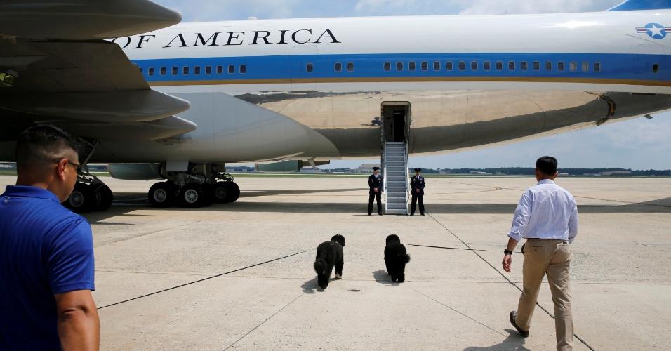 6.ago.2016 - Sunny e Bo, cachorros do presidente dos Estados Unidos, Barack Obama, se preparam para embarcar no Air Force One, o avião presidencial, com destino a Massachusetts, para as férias anuais de Obama e família