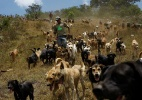 O abrigo mais feliz do mundo: 750 cães de rua vivem em santuário na Costa Rica (Foto: Juan Carlos Ulate/ Reuters)