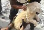 Cão soterrado por terremoto é resgatado vivo no Equador (Foto: Reprodução/Polícia do Equador)