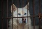 Na Coreia do Sul, jovens rejeitam o consumo de carne de cachorro (Foto: Ed Jones/AFP)