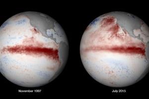 Centro de meteorologia dos EUA vê chance de que La Niña suceda El Niño (Foto: NOAA/globalcoralbleaching.org)