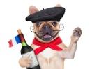 Vinícola em São Roque (SP) promove desfile e concurso de cães neste domingo (Foto: Getty Images/iStockphoto/damedeeso)