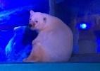 Petição pede fim de aquário na China com 'urso polar mais triste do mundo? (Foto: BBC Brasil)