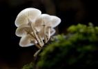 Cogumelos alucinógenos aliviam angústia de pacientes com câncer - iStock