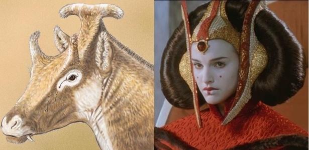 Cientistas 'nerds' dão nomes de Star Wars a animais descobertos