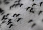 E se eliminássemos todos os mosquitos transmissores de doenças? - Christophe Simon/AFP