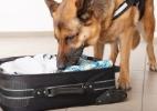Aeroportos dos EUA planejam usar cães farejadores para reduzir filas (Foto: Getty Images)