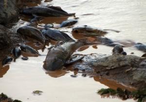Associa��o dos Pescadores e Amigos do rio Doce