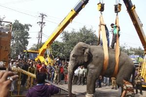 Elefante selvagem 'sai para passear' e causa pânico em cidade da Índia (Foto: Reuters)