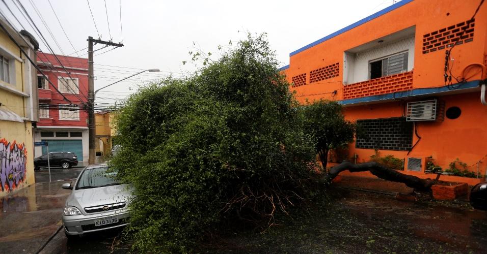 26.set.2015 - A chuva forte que atinge a capital paulista provocou a queda de árvores na cidade, como na rua Itapicuru, em Perdizes, zona oeste de São Paulo, onde uma árvore atingiu um carro. No interior do Estado, a chuva causou mortes e estragos. Duas pessoas morreram e dez ficaram feridas após o desabamento de um prédio na região de Marília (SP)