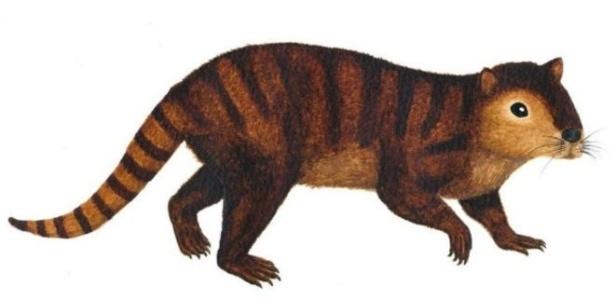 Fóssil do animal, que se assemelha a um castor, foi encontrado nos Estados Unidos