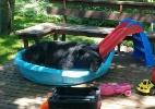 Urso calorento e folgado se refresca em piscina infantil nos EUA (Foto: Reprodução/Facebook/Dave Zbaracki)