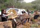 Cena de soltura de centenas de pássaros apreendidos viraliza - Reprodução