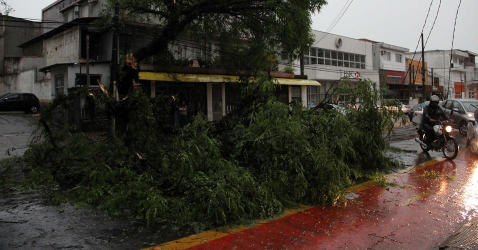 8.set.2015 - Queda de árvore interdita parte da avenida Jaguaré, na zona oeste de São Paulo. Chuvas fortes atingiram a capital paulista nesta terça-feira (8)