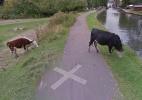 Privacidade garantida! Google Street View borra rosto de vaca na Inglaterra (Foto: Reprodução/Google)