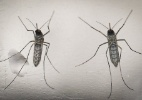 Pulverização aérea contra Aedes é inconstitucional, diz Janot - Oscar Rivera/EFE