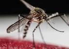 Austrália intensificará testes sobre vírus da zika com dois novos casos relatados (Foto: EFE/Jeffrey Arguedas )