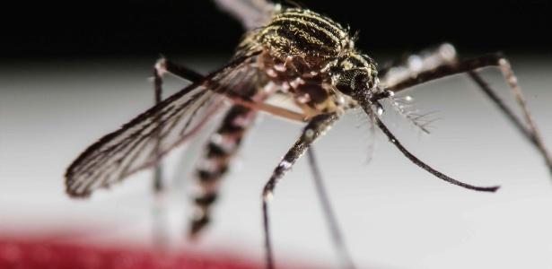 Vírus transmitido pelo mosquito Aedes aegypti causa preocupação para os Jogos