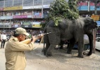 Vídeo flagra ataque de elefante selvagem em vilarejo da Índia (Foto: Reuters)