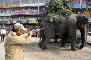 Vídeo flagra ataque de elefante selvagem em vilarejo da Índia (Foto: STRINGER)
