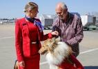 Aérea australiana vai transportar de graça cães abandonados até novos donos (Foto: Reprodução/Facebook/Virgin Australia)