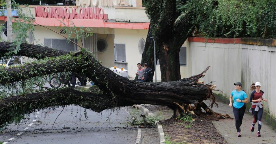 6.jun.2016 - Uma árvore de grande porte tombou próximo ao estádio do Pacaembu, em São Paulo, após a forte chuva que atingiu a capital. Em Campinas uma tempestade causou a queda de ao menos 70 árvores, destelhou casas e alagou avenidas, na madrugada de domingo