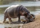 Conheça os animais mais perigosos do mundo (Foto: Reprodução)