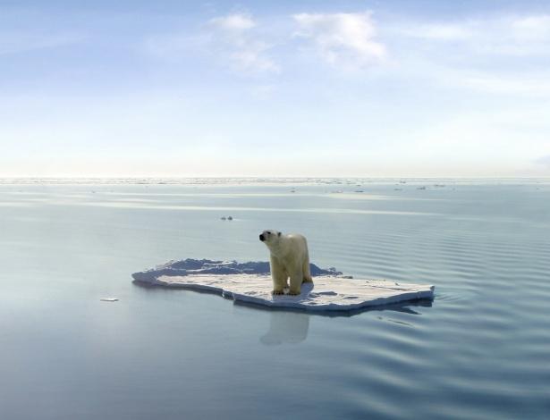 Resultado de imagem para urso polar ilhado