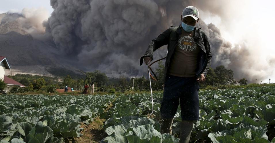 24.jun.2015 - Alheio à imensa coluna de cinzas lançada pelo vulcão Sinabung, trabalhador aplica pesticida em plantação de repolhos na vila de Tiga Serangkai, no oeste da Indonésia