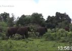 O aterrorizante momento em que ambientalista é atacado por elefante - Born Free Foundation