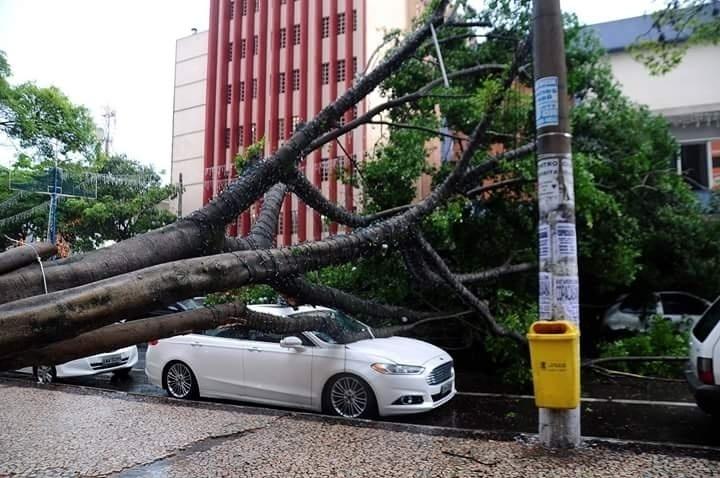 17.dez.2015 - Uma árvore de grande porte caiu em cima de um carro em Volta Redonda (RJ). O acidente, provocado pelas fortes chuvas que caem na cidade, não deixou feridos e ocorreu no centro comercial da cidade, em região conhecida como