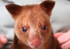Dilvulga��o/Adelaide Zoo