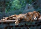 Escassez de alimentos na Venezuela leva fome a zoológico de Caracas (Foto: Carlos Jasso/ Reuters)