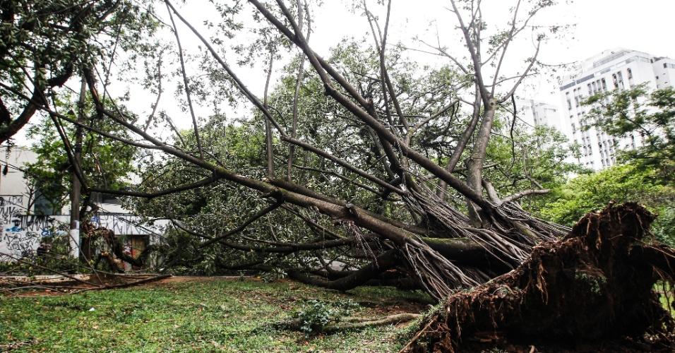 21.out.2016 - Na rua Ourânia, Alto de Pinheiros, em São Paulo, uma árvore caiu e as raízes ficaram expostas após forte chuva na capital paulista