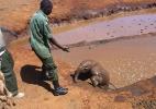 The David Sheldrick Wildlife Trust/Divulga��o
