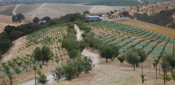 Vinícola em Templeton, na Califórnia; seca afetou atividade
