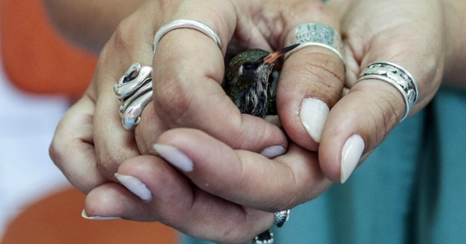 24.set.2015 - Bióloga segura um filhote de beija-flor no Parque Estoril, que abriga espécies que foram deslocadas de seu habitat devido à destruição provocada pelo crescimento urbano ou ao tráfico de animais