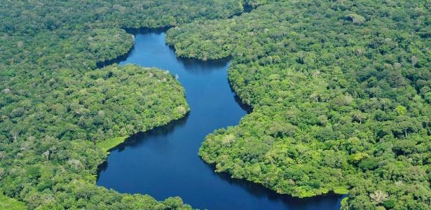 """Florestas podem estar """"lutando"""" contra o aquecimento. E você/"""