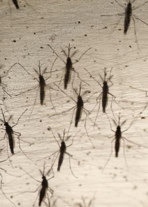 Vale a pena tomar a vacina contra a dengue?