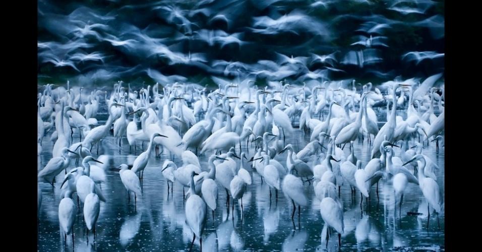 Concurso premia os melhores flagras da natureza e vida for Noticias naturaleza